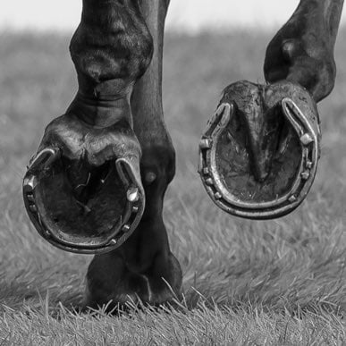 Horseshoes at Burghley